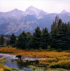 Grand Tetons and Moose