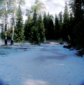 Forest Hailstorm and Ground Fog