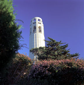 Coit Tower and Hedge