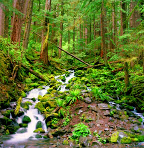Under the Canopy, Sol Duc Valley